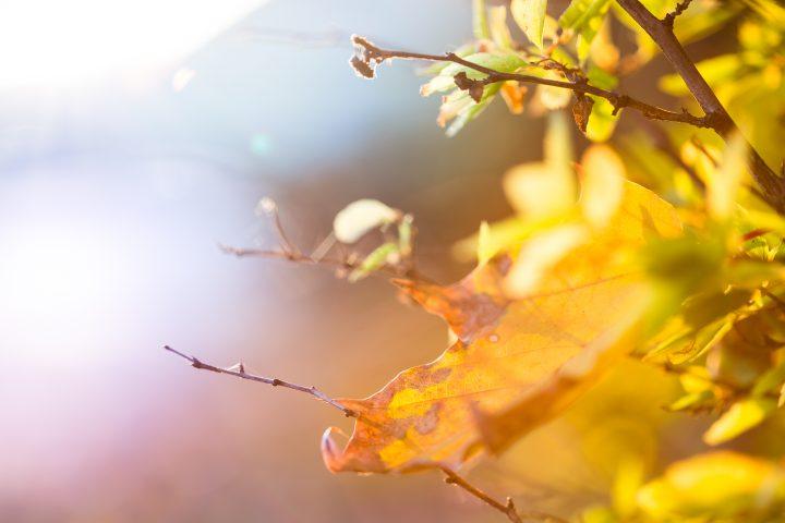 Fluitend de herfst door